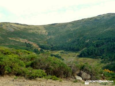 La Dehesa Bonita - Abedular de Somosierra_ excursiones y senderismo Madrid